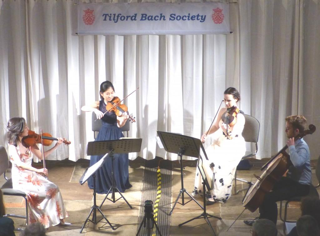 Maiastra quartet from balcony